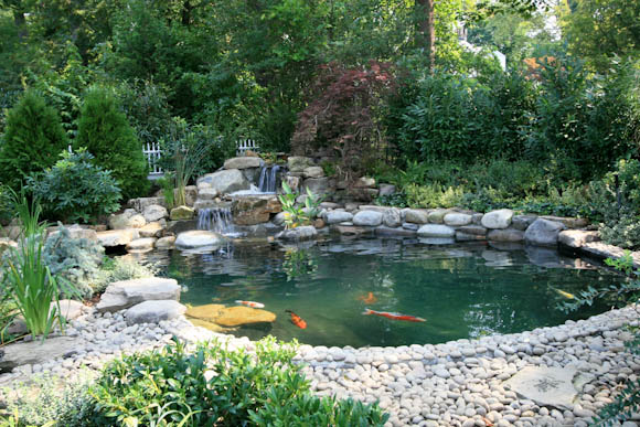 Gunite Koi Pond