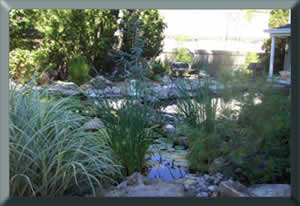 Water Garden and Koi Pond NJ