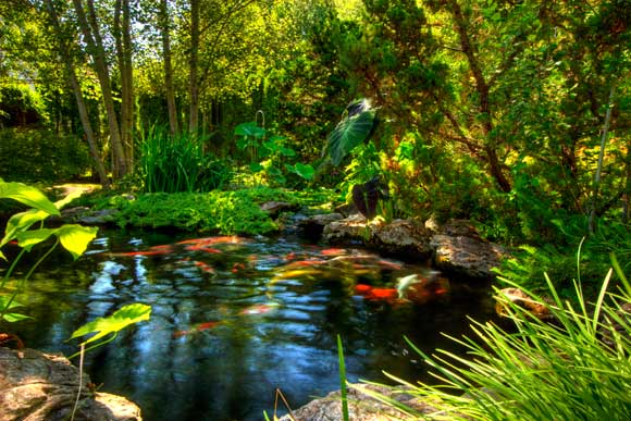 Pond service pond repairs filtration upgrades new jersey for Pond service